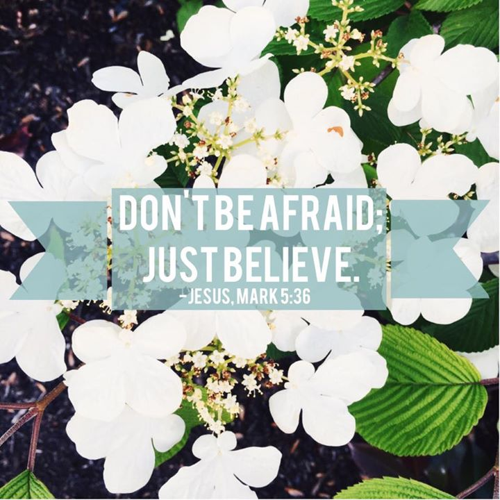 Don't be afraid; just believe - Mark 5:36 // stephanieorefice.net