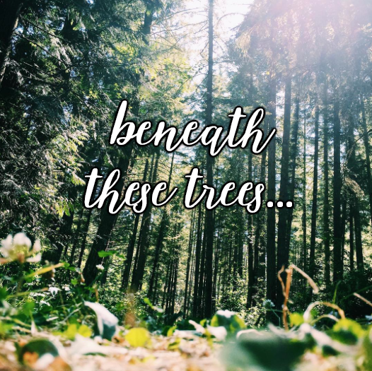 beneath these trees.. // stephanieorefice.net